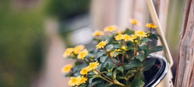 Pflanzenhalter für Innen und Außen